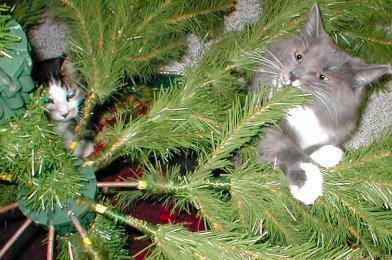 Iris Christmas Tree Storage Box